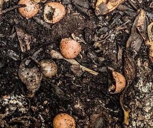Turning Kai into Compost – get your family composting!