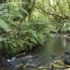 Stream at ZEALANDIA. Photo Credit Steve Attwood