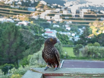 Wellington is becoming a global leader as we learn to live with nature
