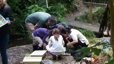 Citizen Scientists help nurse Kaiwharawhara Stream back to health
