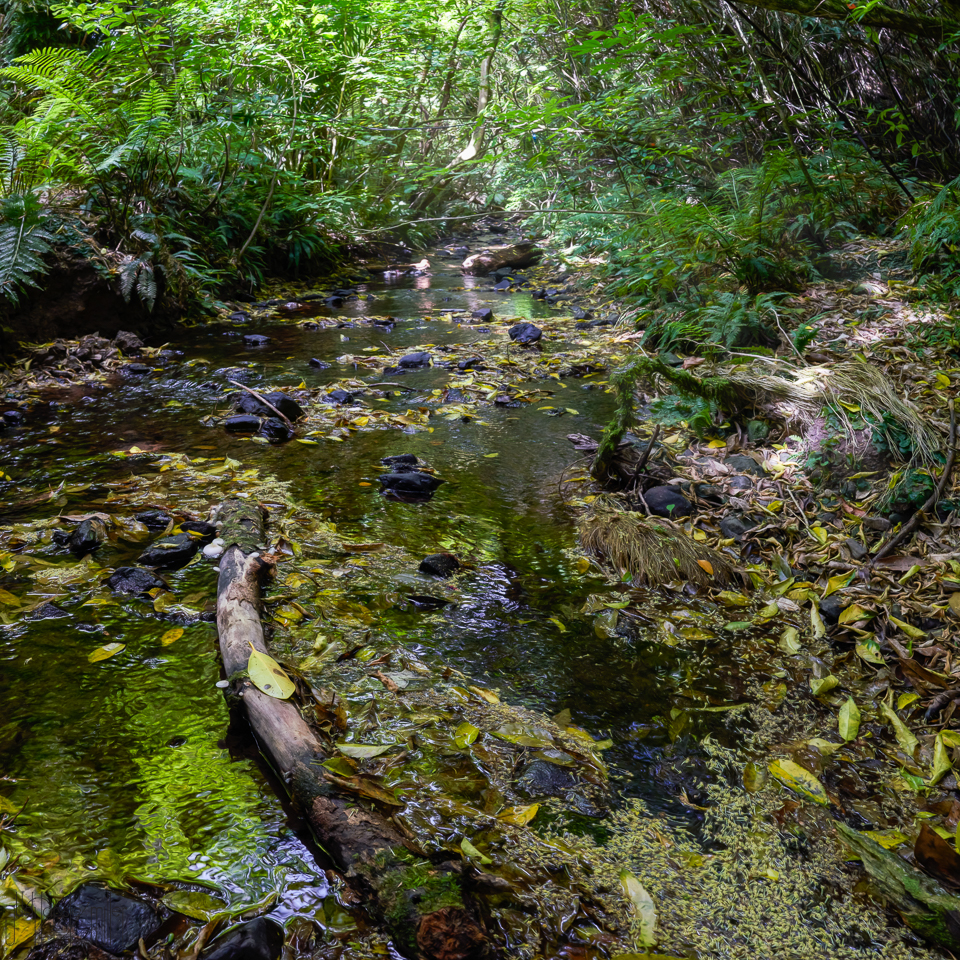 """Te Mahanga stream"" - photo art by Judi Lapsley Miller"