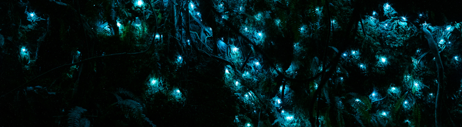 Fairylights (aka pūrātoke/glowworms) are stread across the forest at night.