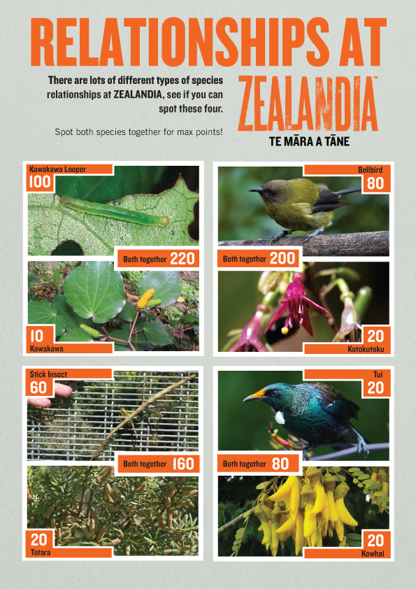 Relationships At ZEALANDIA activity sheet